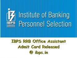 Ibps Rrb Office Assistant Admit Card Released Ibps In Dow