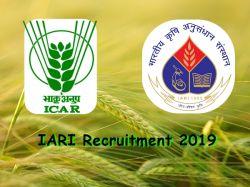 Iari Recruitment 2019 Walkin For Junior Research Fellow An