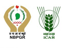 Nbpgr Recruitment 2020 Apply Online For Research Associate Post