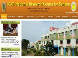 Nrcb Banana Recruitment 2020 Walk In Interview For Senior Research Fellows Post