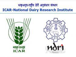 Icar Ndri Jobs 2021 Application Invited For Srf Jrf Office Assistant Post