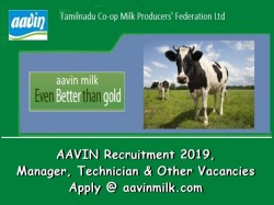 Aavin Recruitment 2019 Manager Technician Other Vacancie